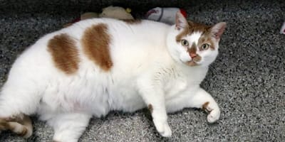 Long-stay cats searching for loving homes