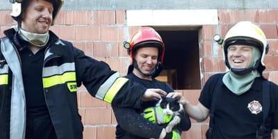 Kotek ze strażakami.