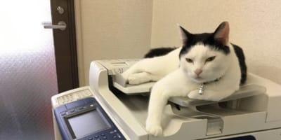 gatto su fotocopiatrice