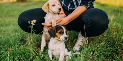 Przedszkole dla psów –wszystko, co powinieneś o nim wiedzieć