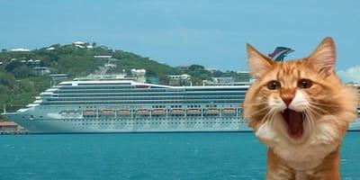 gatto con nave da croiciera