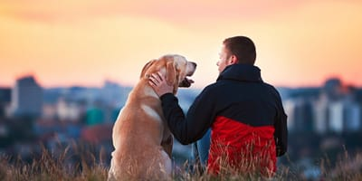 How should you speak to your dog?