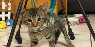 gato silla de ruedas