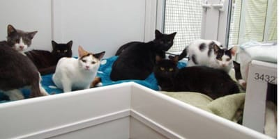 45 cats need to be rehomed after elderly woman is evicted