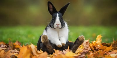 conejo salva incendio