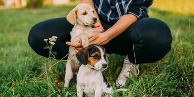 Por qué NO debes comprar un perro en un criadero de perros