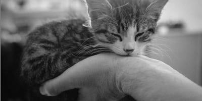 foto di gatto in bianco e nero