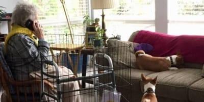Nipote blocca la nonna in gabbia: il motivo lascia perplessi