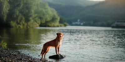Seen, Städte, Wälder: Bayern mit dem Hund entdecken