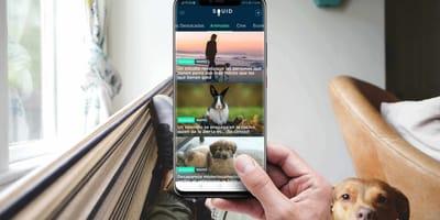 perro gato Squid App noticias wamiz