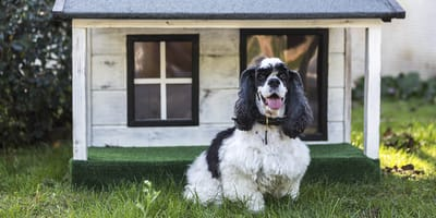 Consigli utili su come costruire una cuccia per cani