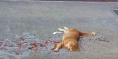 Katze im Blut: Als ein Mann helfen will, erlebt er sein blaues Wunder!