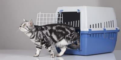 kontener dla kota