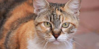 The elderly cat: Understanding them and adapting