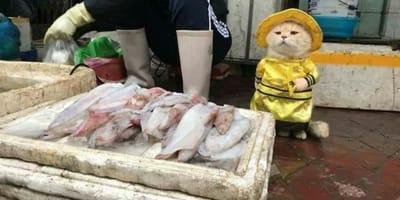 Kot sprzedawca.