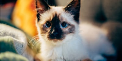 The language of cats: Deciphering 9 signs to help you understand your cat