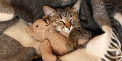gato durmiendo peluche
