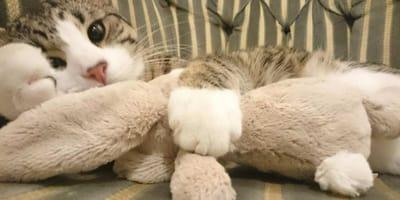 gattino-sdraiato