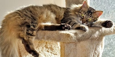 How to handle your cat's shedding this Spring