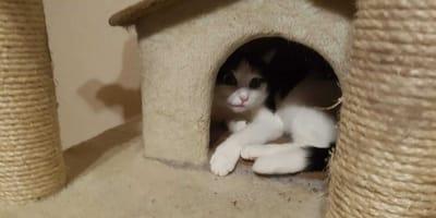 Autistische Katze Fienchen