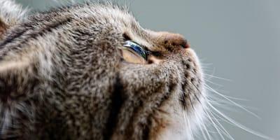 Kocie oko.