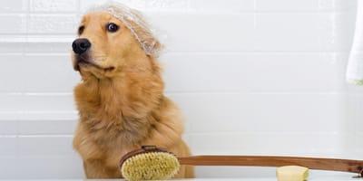 Primer baño de mi perro