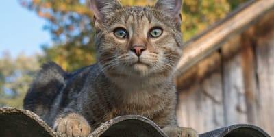 Kot dachowiec – dlaczego warto go adoptować?