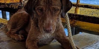 Dramatyczna akcja ratowników - wyłowili psa dryfującego 220 km od brzegu! (VIDEO)