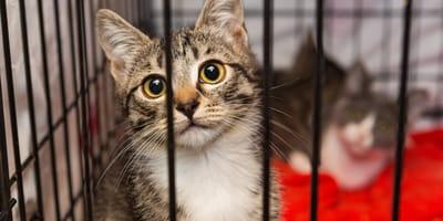 Wszystko, co musisz wiedzieć o adopcji kota ze schroniska