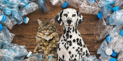 ekologia a psy i koty
