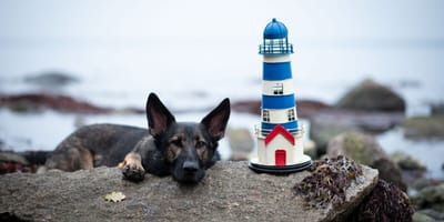 Hund am Strand von Fehmarn mit Leuchtturm