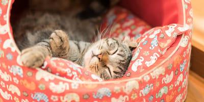 Camas para gatos: ideas originales y cómodas