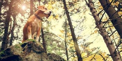 Hund im Bayerischen Wald