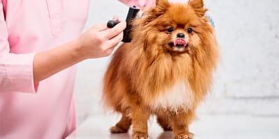 Cepillo Furminator: ¿el mejor para tu perro?