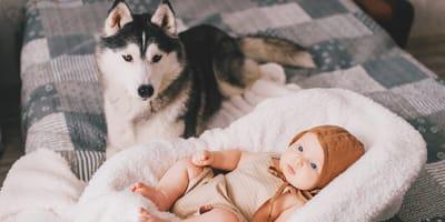 ¿Por qué mi perro le tiene celos a mi bebé?