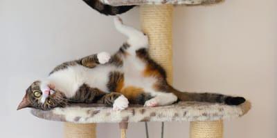 Waleriana dla kota alternatywą dla kocimiętki