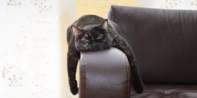 Smutny i znudzony kot – jak poprawić mu nastrój?