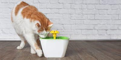 Fuente para gatos: ¿son una buena opción para que beban agua?