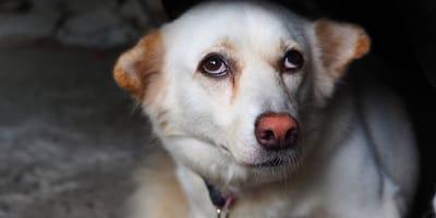 Angsthunde: So erkennen Sie, ob Ihr Tier sich fürchtet
