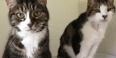 The number of unwanted cats in Birmingham and the UK has swelled.