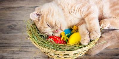 8 kotów, które świętują Wielkanoc po swojemu