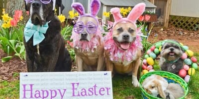 Best dressed pets at Easter time