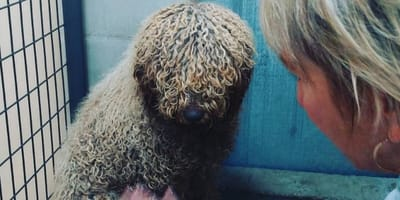 New regulations for dodgy breeders and owners of illegal puppy farms