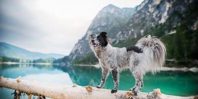 Hund in Südtirol