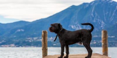 Hund am Gardasee