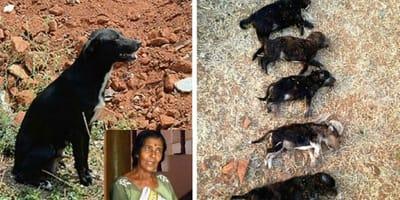 cachorritos asesinados india