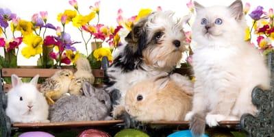 Keine Osterschokolade für Hunde und Katzen