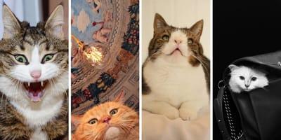 Gatos celebridades
