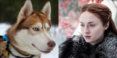 Nombres de perro de Game of Thrones