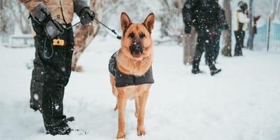 Apel straży granicznej - psy pracujące też potrzebują finansowego wsparcia od Państwa